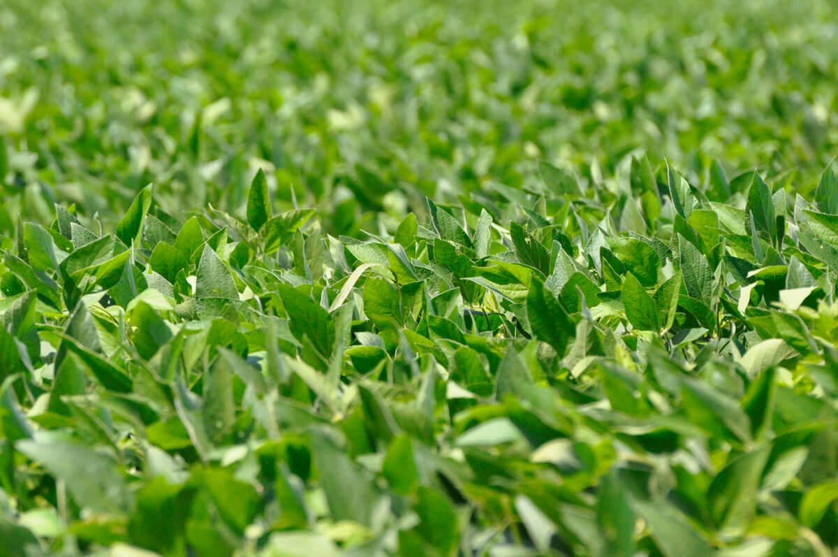 weedspraying